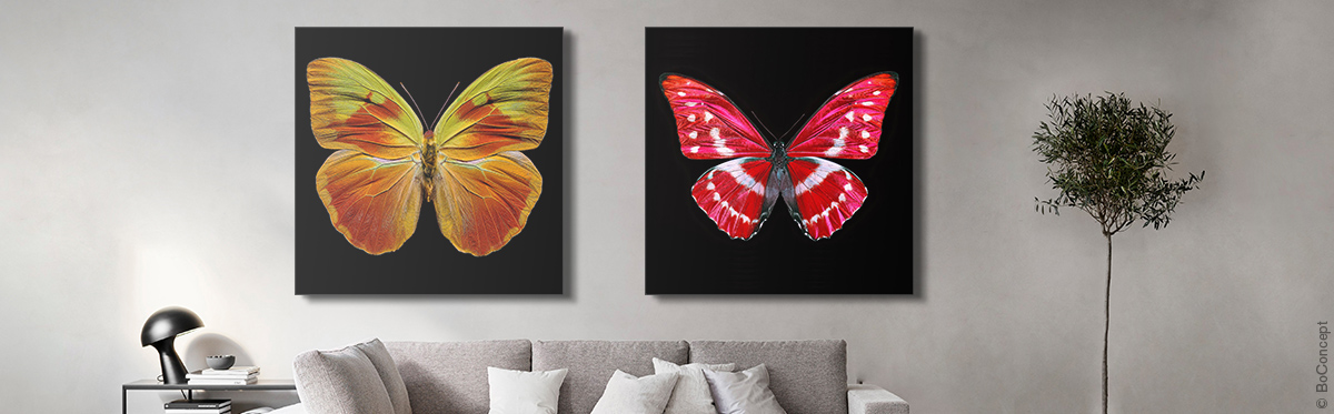 Butterfly XI (l.)and Butterfly X (r.) by Heiko Hellwig