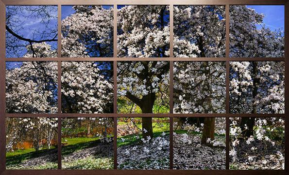 Christiane Zschommler: Blossom I