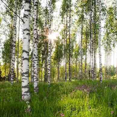 forest photo art