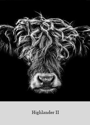 Highlander II von Claudio Gotsch
